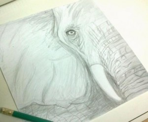 slon bianca